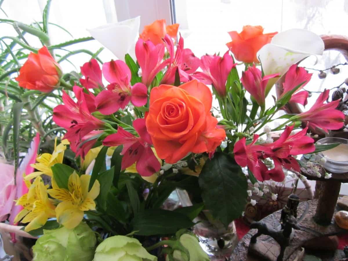 abrir una floristeria