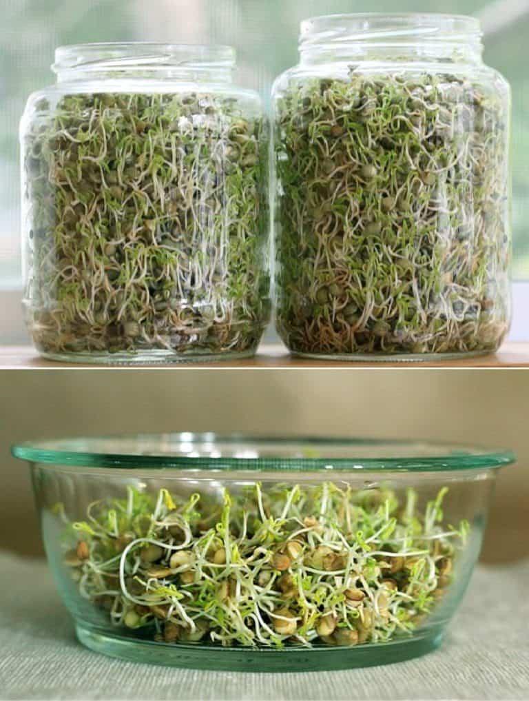 Como hacer abono casero de forma fácil para mantener tus plantas