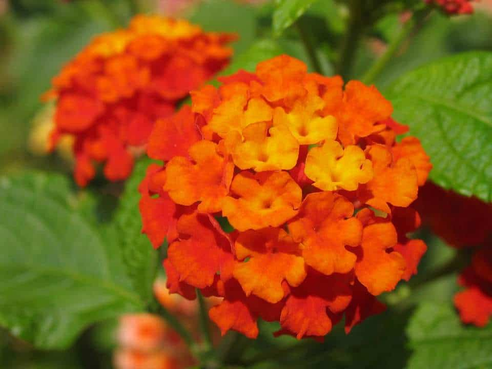 flores de color naranja