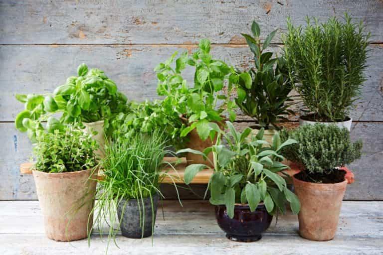 Claves y consejos para las plantas aromáticas