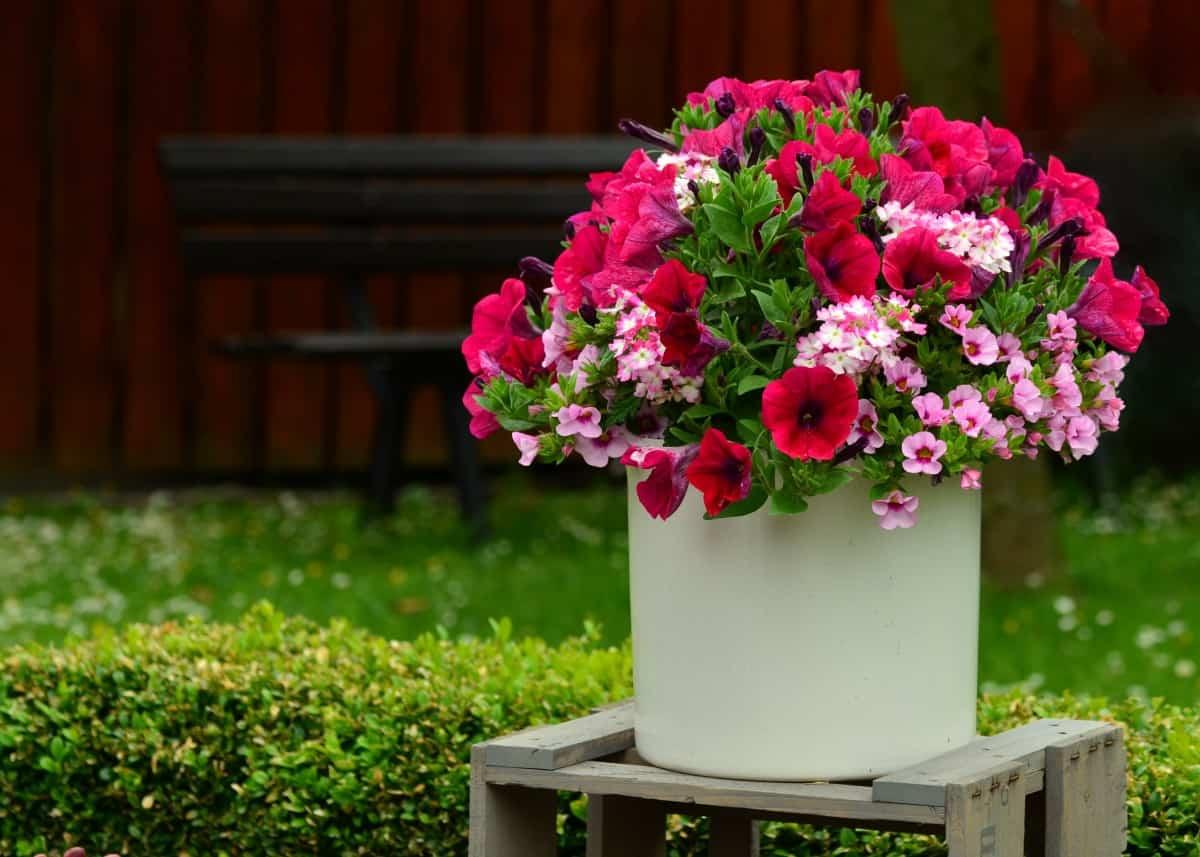 replantar flores