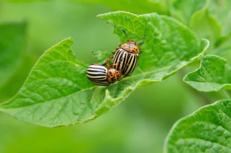Cómo tratar las plagas y enfermedades comunes de las plantas
