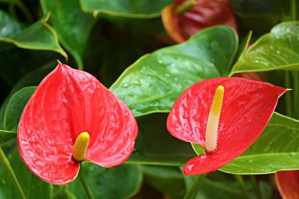 las plantas no florecen