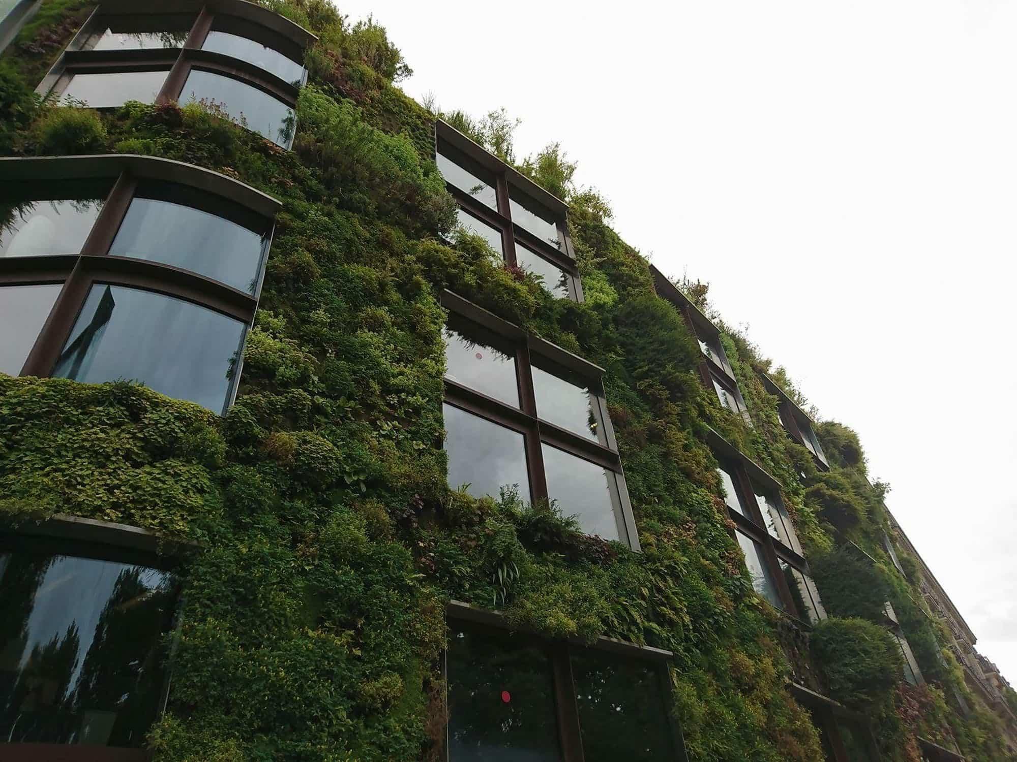 Conoce todo lo que necesitas saber sobre los jardines verticales