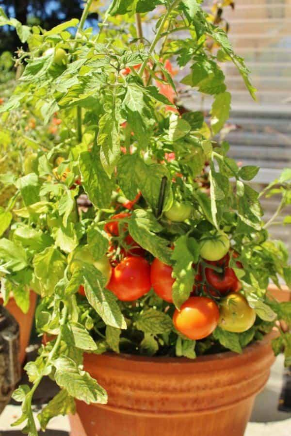 Plantas que podemos sembrar en maceta