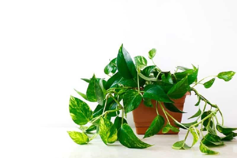 cultivar en casa