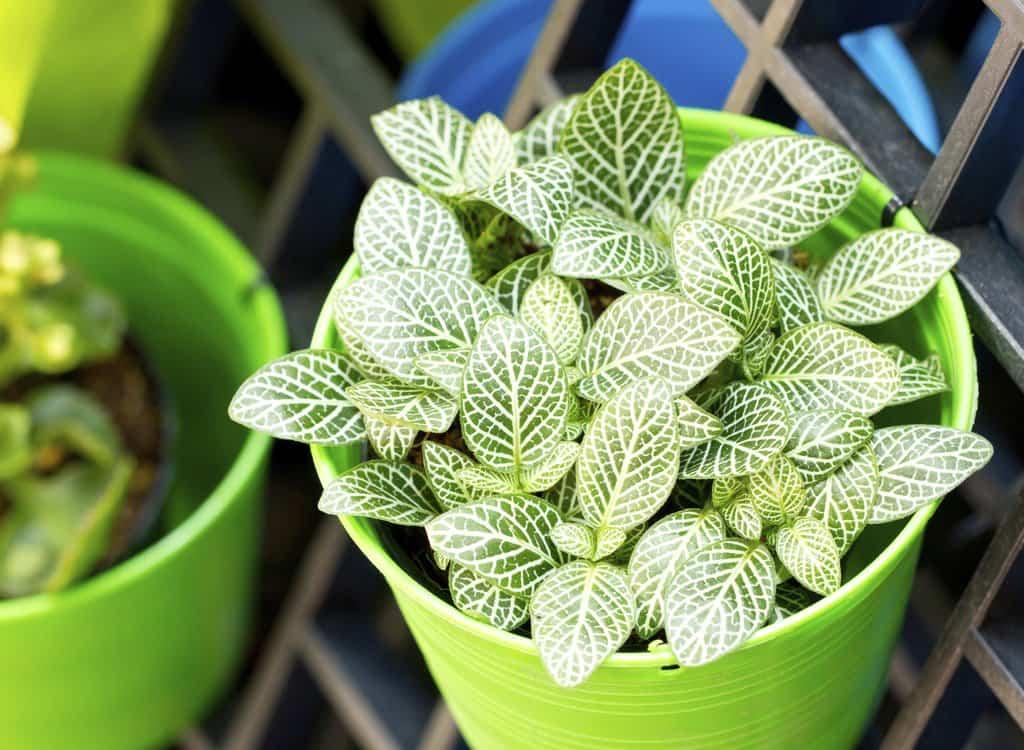 Plantas que podemos cultivar en casa para disfrutarlas