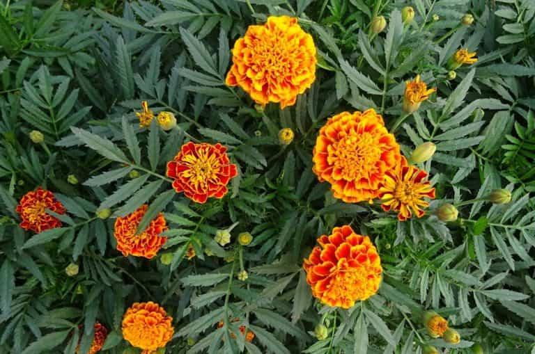 Plantas para cultivar en primavera perfectas para estos meses