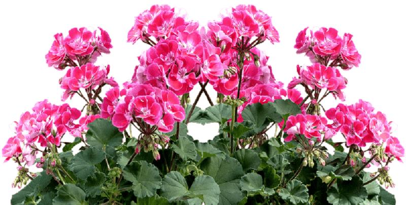 Plantas para cultivar en primavera