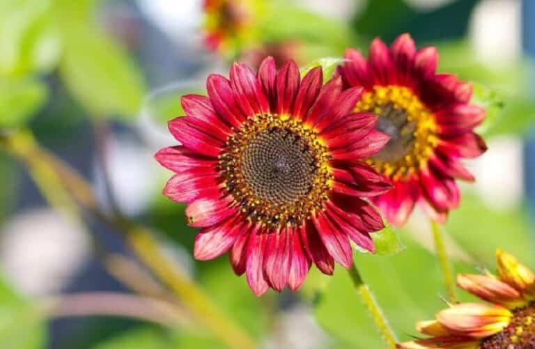 7 plantas que necesitan mucho sol en primavera