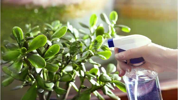 tendencias para recorrer el mundo desde la jardineria 4