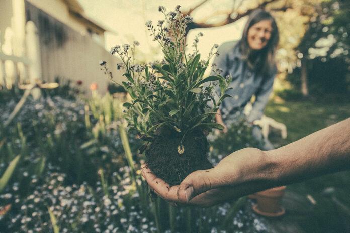ideas decorar jardin sin presupuesto
