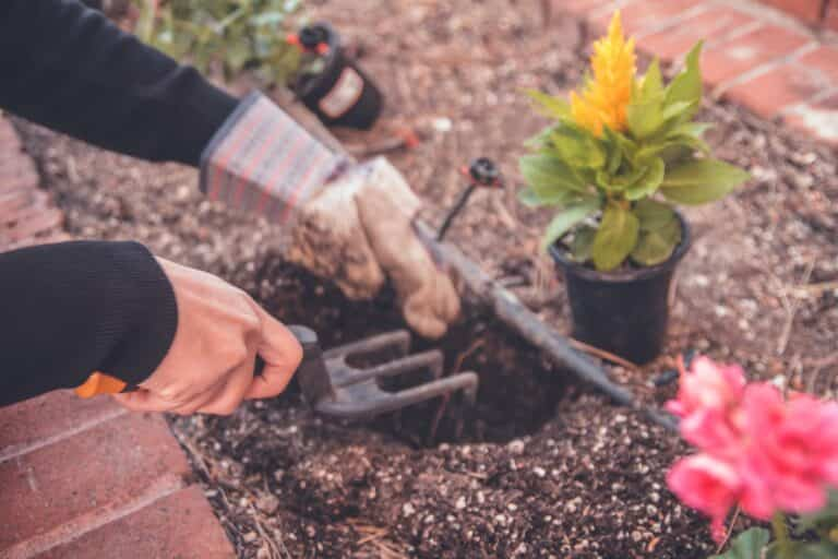 Transporte de plantas: cómo hacer que tus plantas sobrevivan a la mudanza