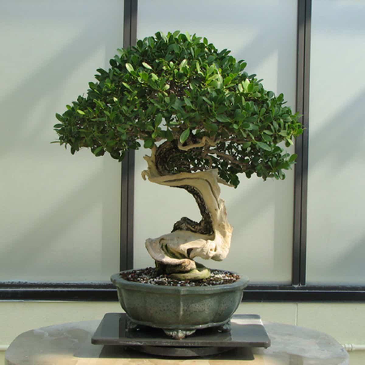Todo lo que debes saber sobre cómo cuidar a los bonsáis