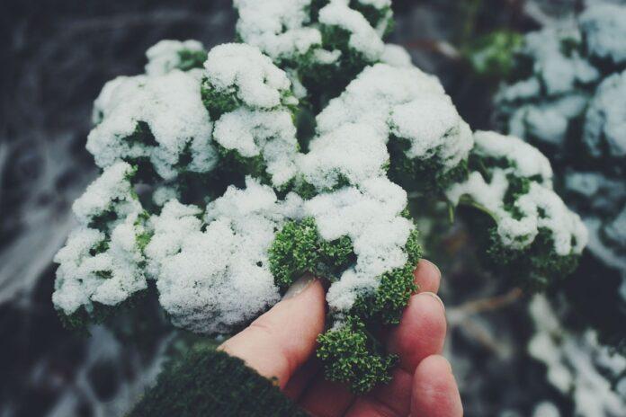 plantas para cultivar en invierno