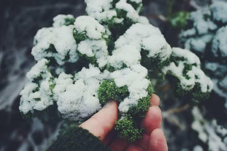 Estupendas plantas para cultivar en invierno