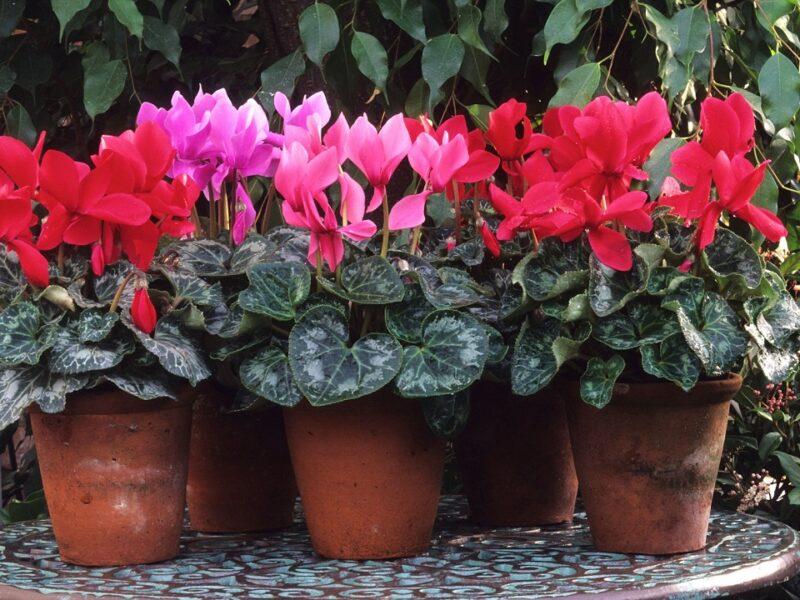 plantas para decorar en enero