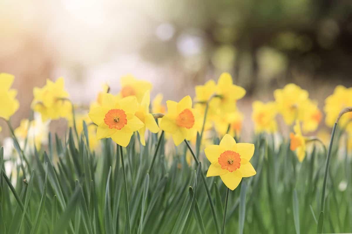 cultivar en primavera