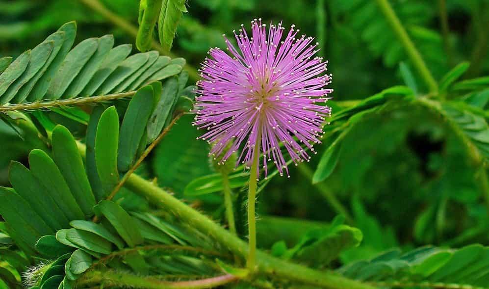 Algunas curiosidades sobre las plantas, flores y árboles