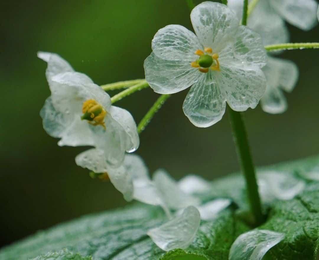 curiosidades sobre las plantas