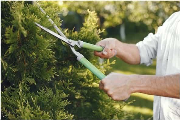 El perfil profesional de un jardinero profesional