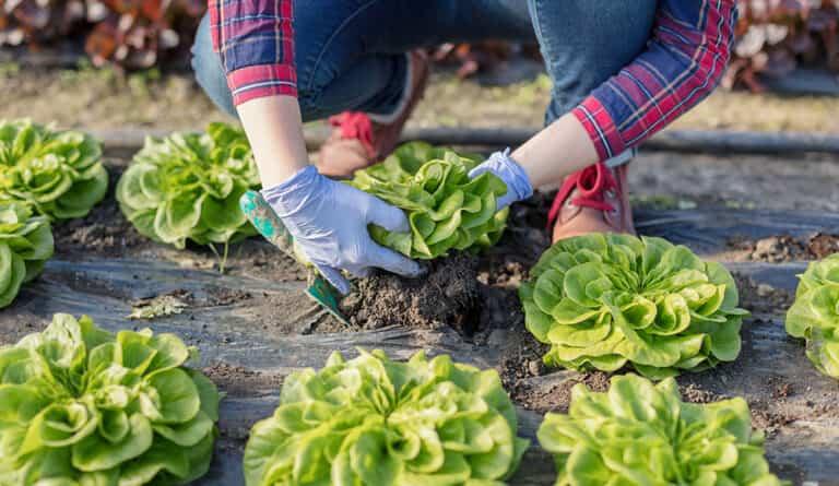 ¿Qué hortalizas puedes plantar en la sombra para dar vida a tu huerto?