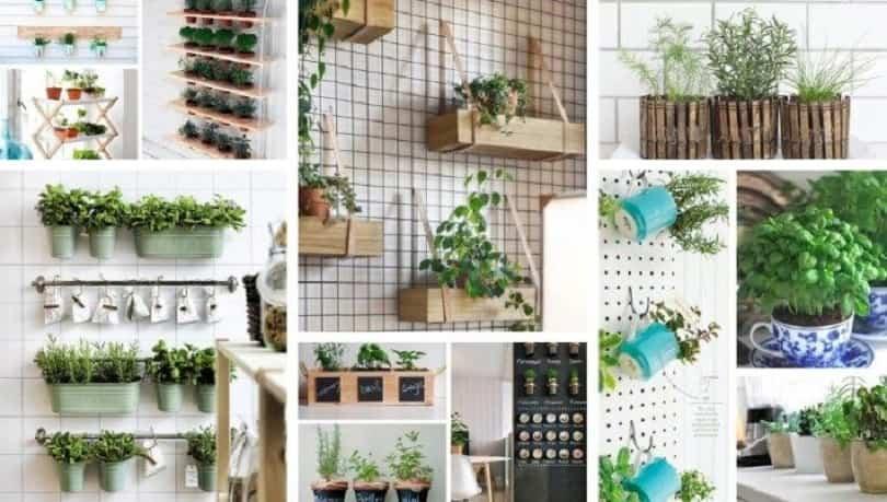 huerto de plantas aromáticas