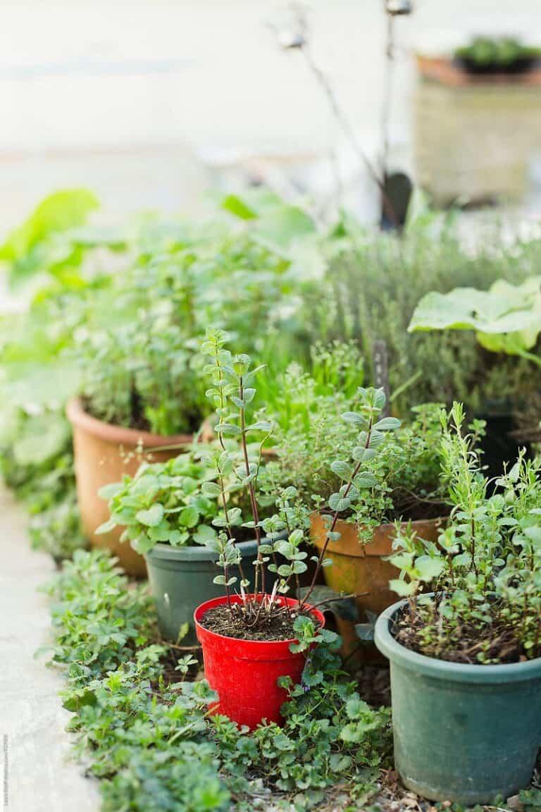 Consejos útiles para empezar tu huerto de plantas aromáticas