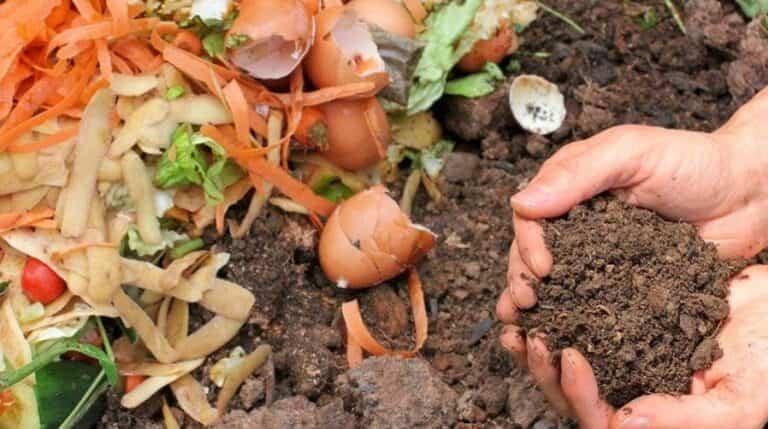 Formas de hacer abono casero para tus plantas