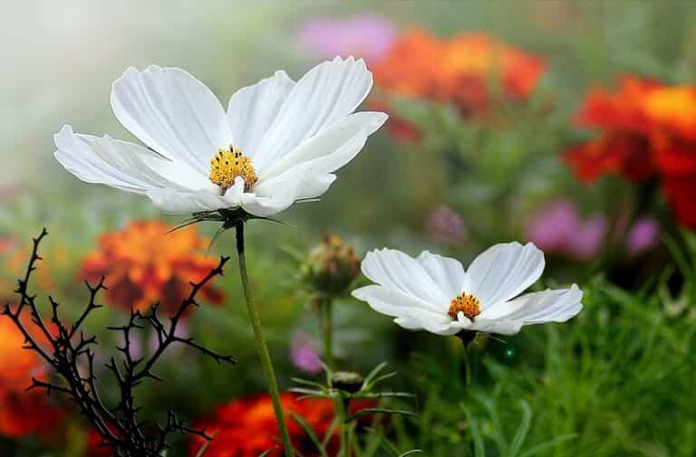 Consejos útiles para cuidar del jardín sin problemas