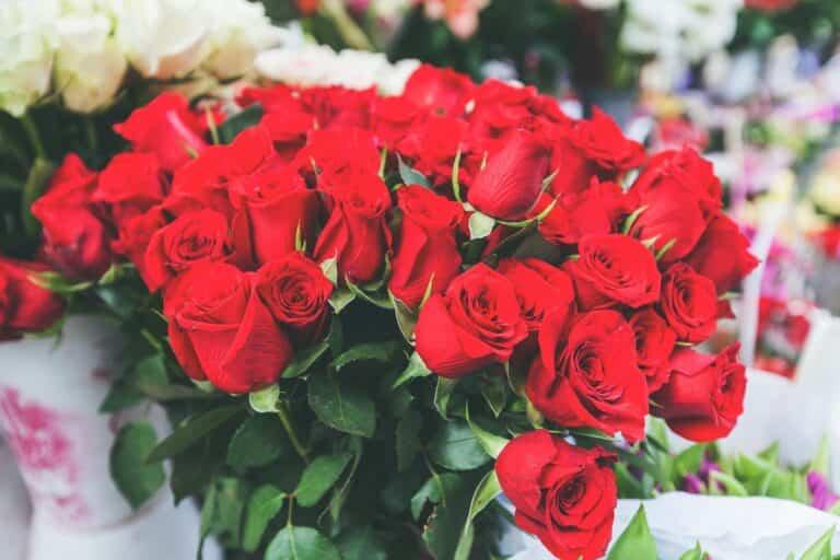6 tips para conservar durante más tiempo un ramo de rosas