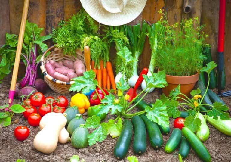 ¿Qué podemos cultivar en otoño en nuestro huerto o jardín?